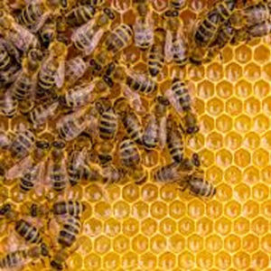 http://www.apiculture-lausanne.ch/